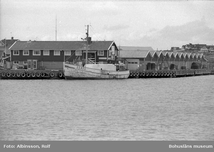 """Enligt fotografens noteringar: """"Smögens fiskauktion, LL 625 Hallaren lossar. Det är Valborg, ingen auktion ikväll.""""  Fototid: 1996-04-23."""