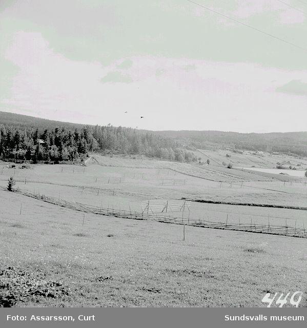Skogsdungen på en halvö i Lindsjön, där grunden till  Attmars kyrka      enl. trad. ligger.