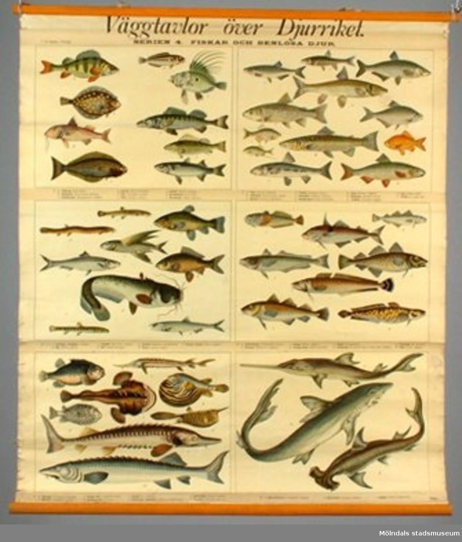 """""""Väggtavlor över djurriket. Serien 4. Fiska och benlösa djur.""""Planschen är rullad.Sliten."""