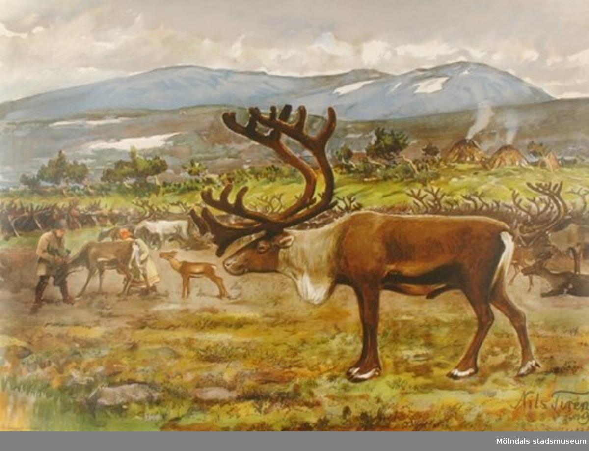 Biologi.Ren: Bilden av svenska djur 1.Original: Nils Tirén 1917.Esselte AB, Stockholm.