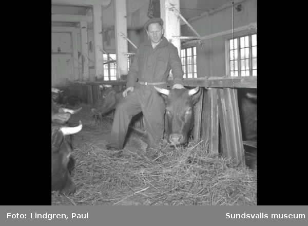 Hemma hos Bengtsson i ladugården. Skön.