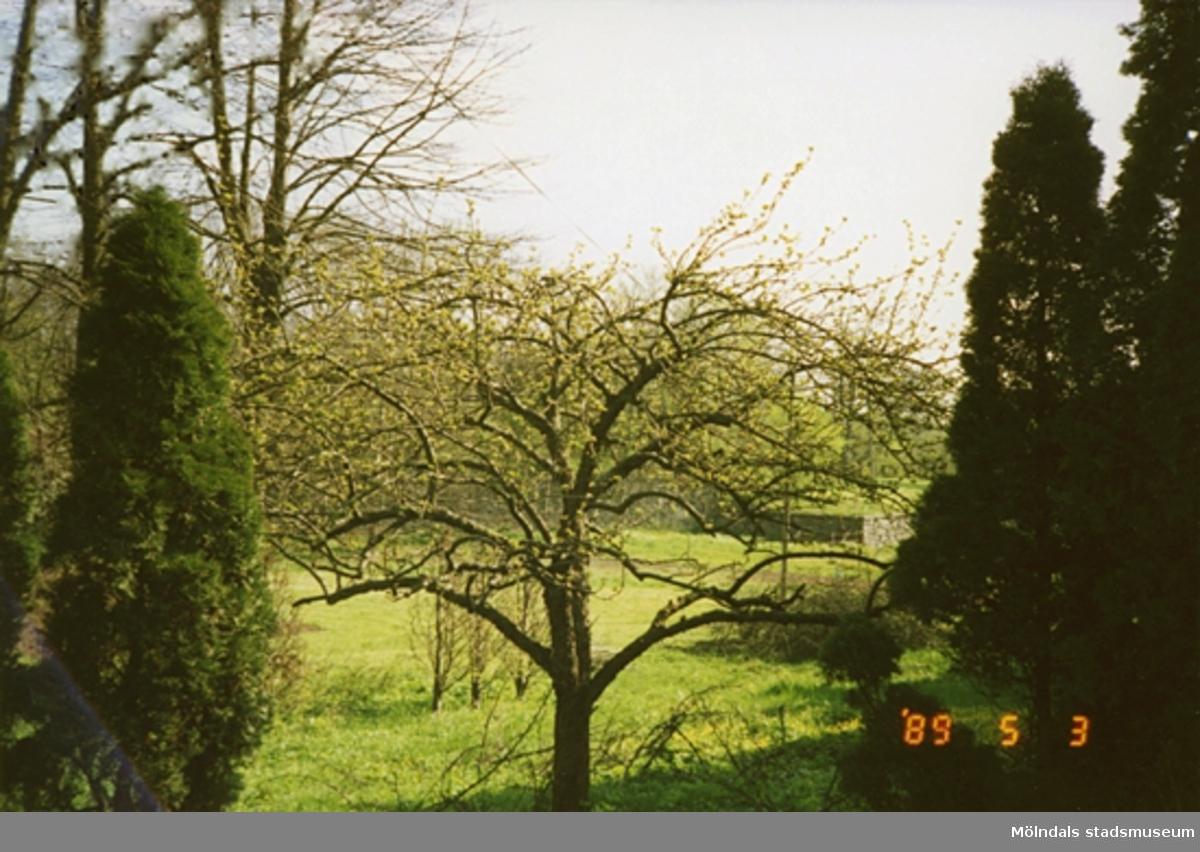 En del av skogsbygden och lite längre bort ser man en stenmur.