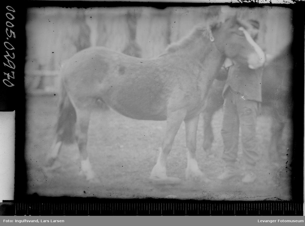 Hest.