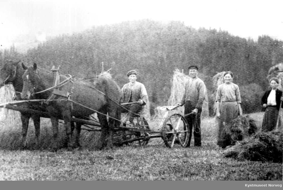 Ukjente personer på slåttonn i Henning, Steinkjer