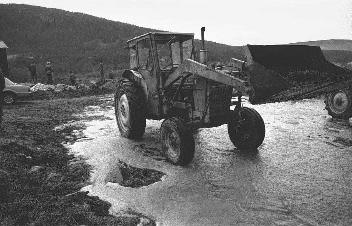 Tynset, Møkktrekk ut i Glåma, Fjøs, Traktor