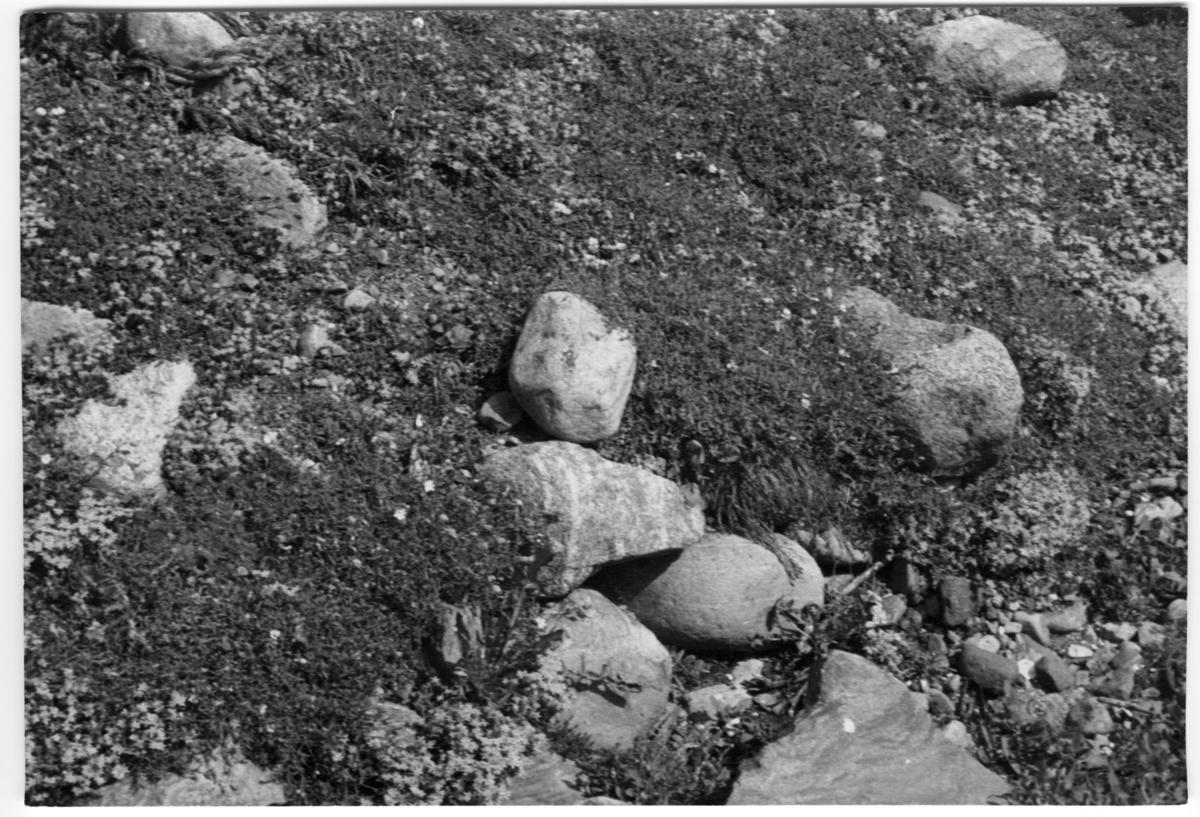 'Närbild på stenblock i strandvall.'' Bildtext: ''Strandvall vid havet, öns västsida.'' ::  :: Ingår i serie med fotonr. 7038:1-16 med bilder från fyndlokaler av skalbaggar i Göteborgstrakten, dessa lokaler finns beskrivna i anteckningsböcker med Arkivnr. 1542.'