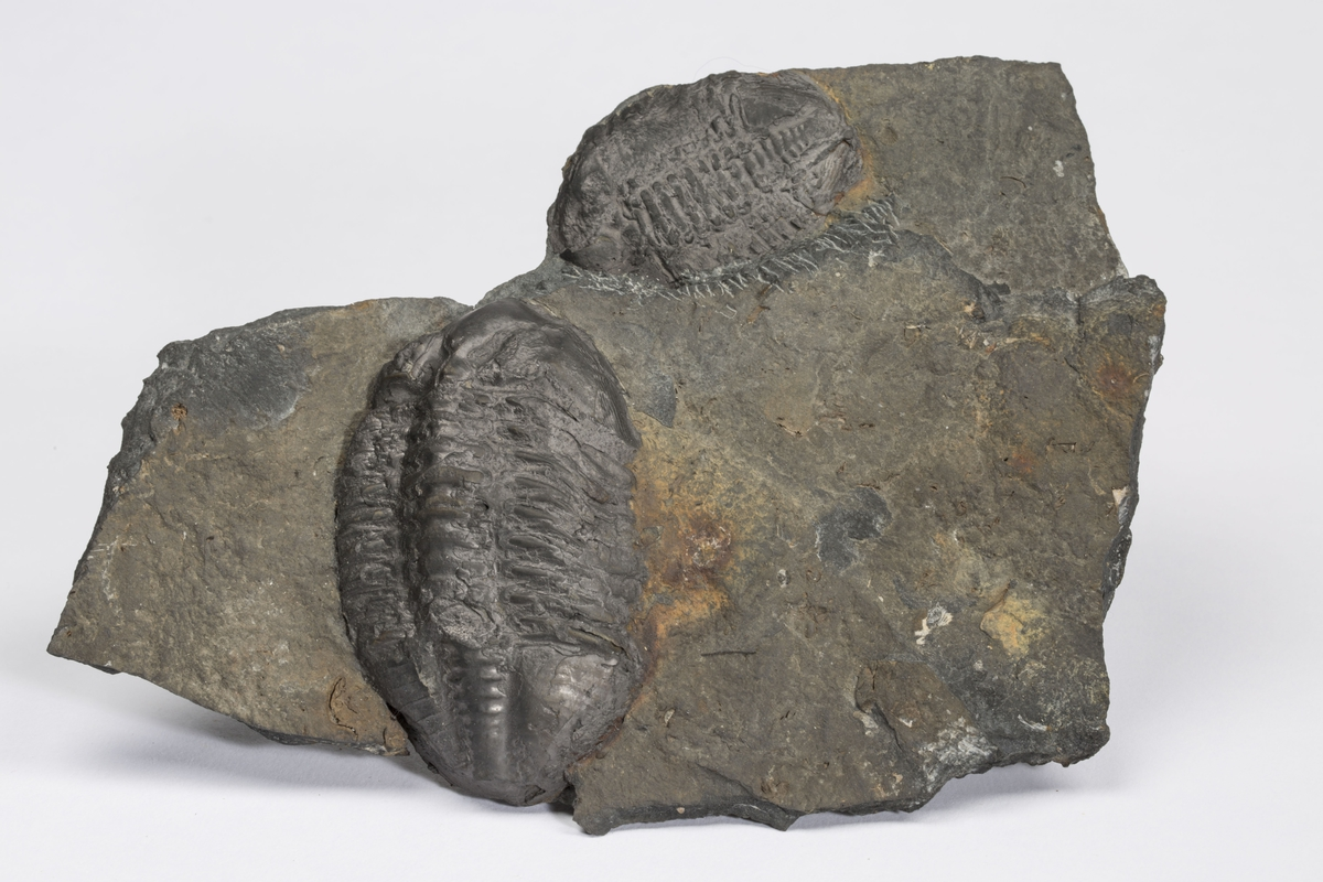 Fossil TO KOMPLETTE