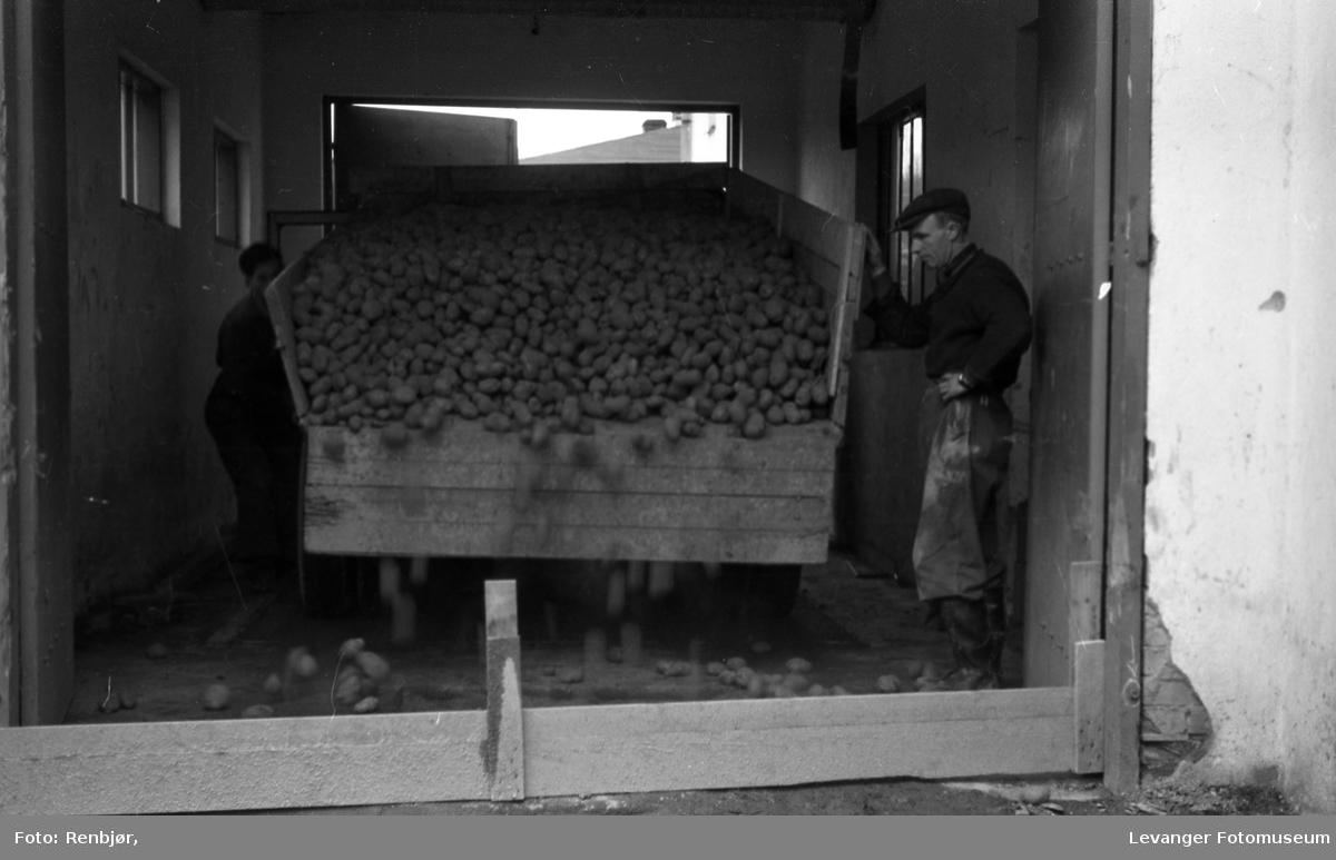 Potet-tørkeriet, Levanger