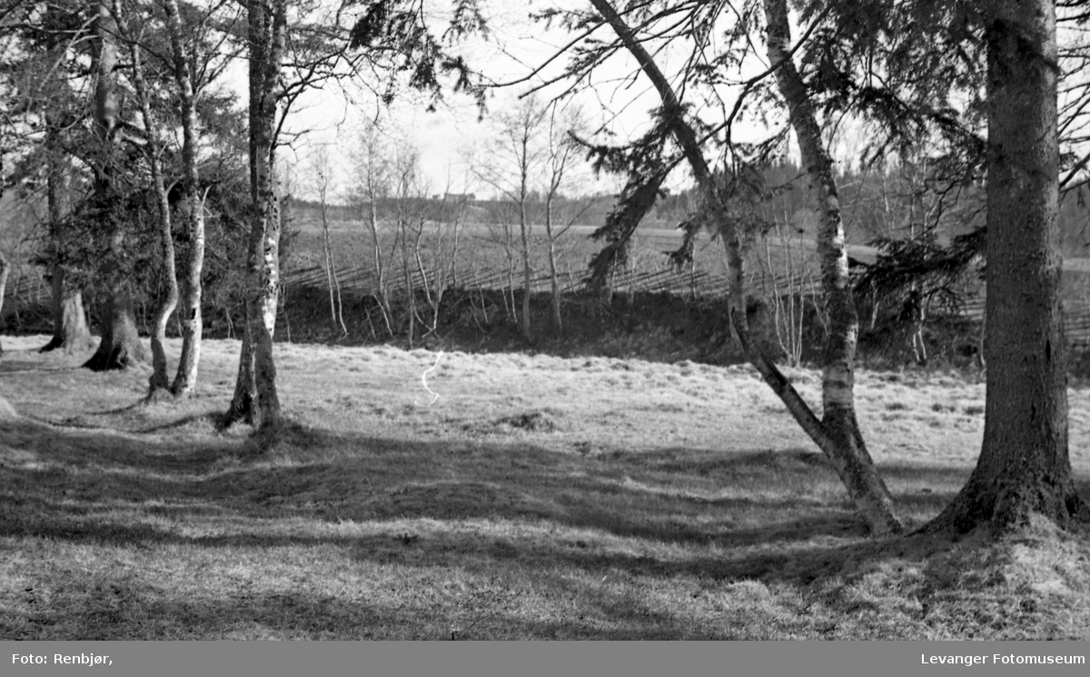 Mo- Lunden parktrær, Levanger