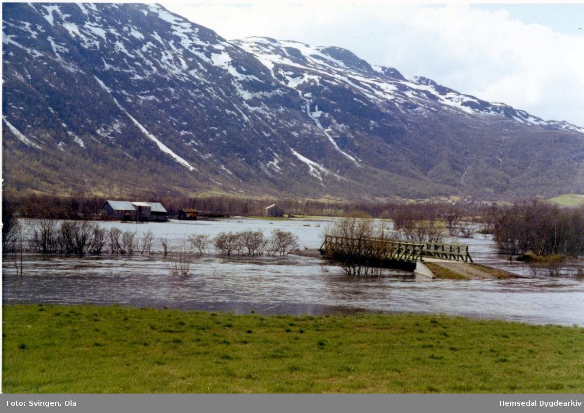 Flaumen i Grøndalen i pinsehelga 1971.