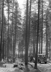 Løten Almenning. Skogsbilveg, personbil D-890, ukjent mann.