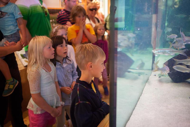 Barn ser på fiskene i akvariet