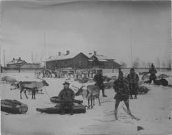 Samer med renar och renspan i Kiruna 1902.