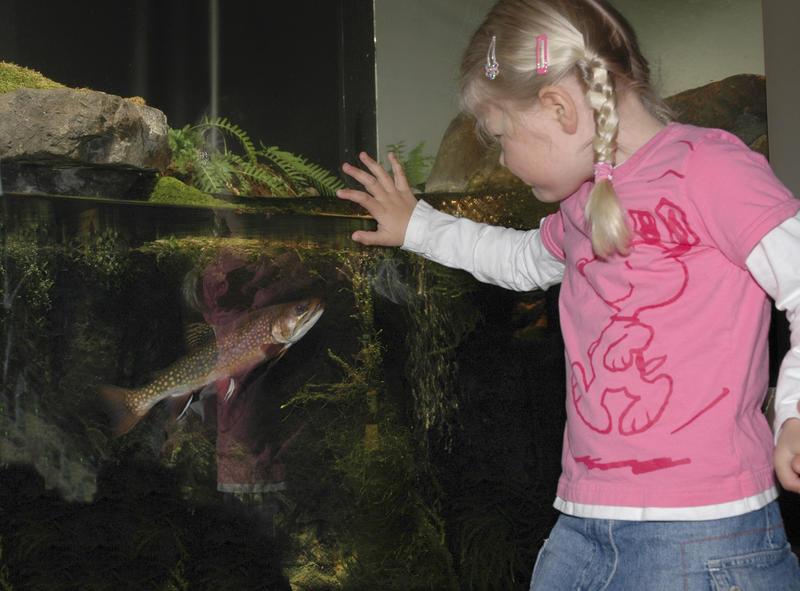 Mari ser på ørret i akvariet 12/4 2005. (Foto/Photo)