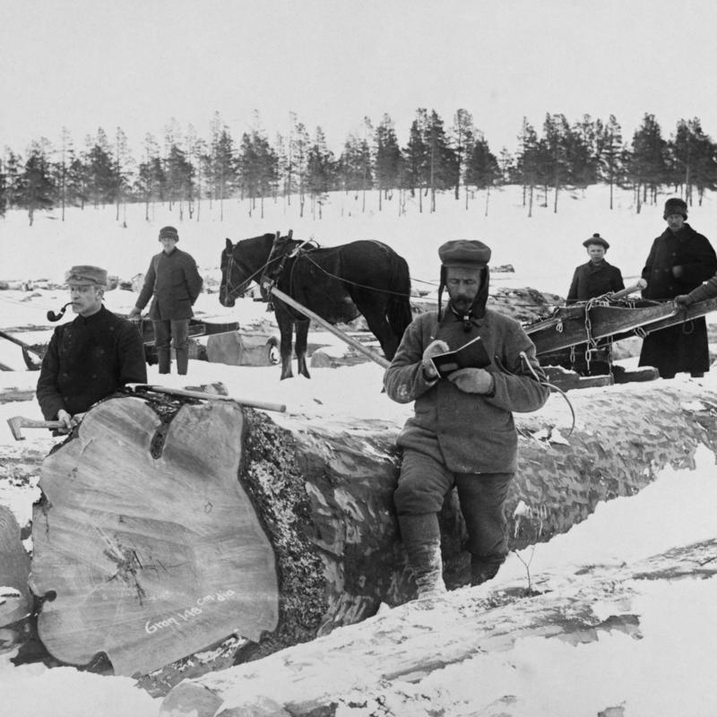 Tømmermåling på Femundsjøen vinteren 1905