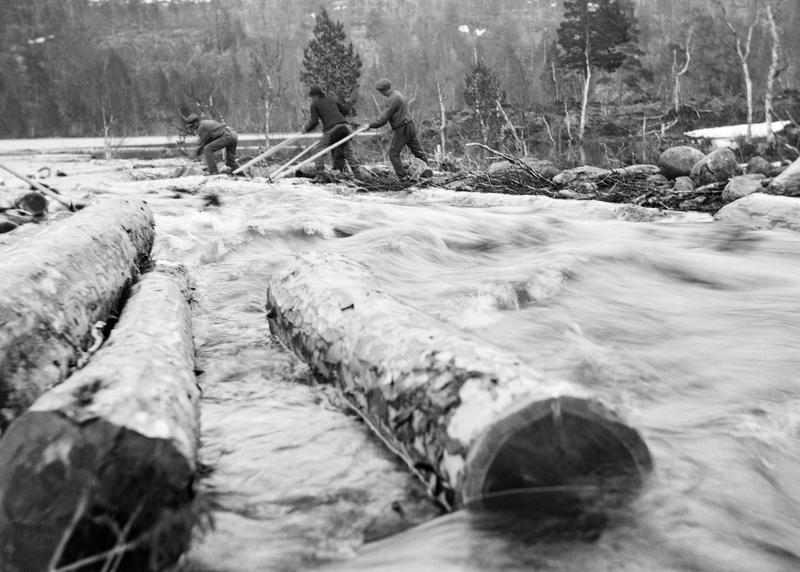 Tømmerfløting i Elgåa (Foto/Photo)