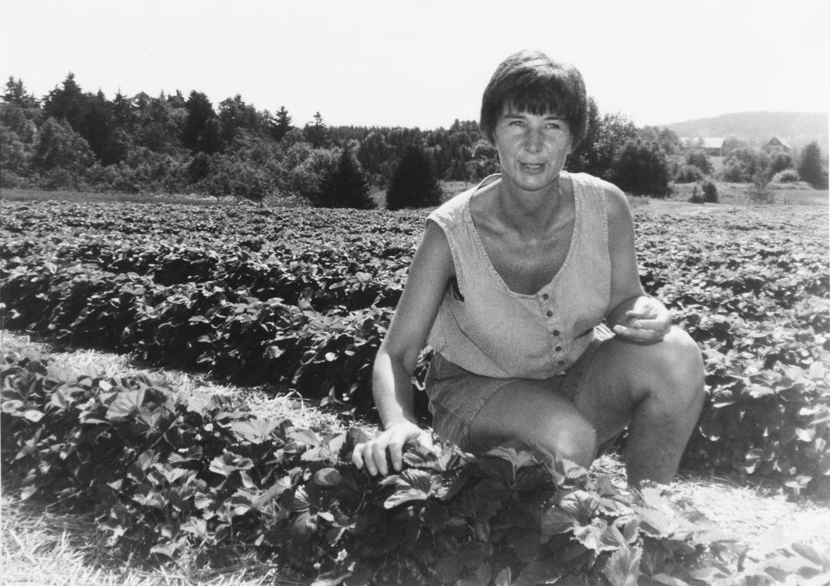 Anne Karlsen (?) tilbød selvplukk av jordbær på gården i Solbergveien, Slattum