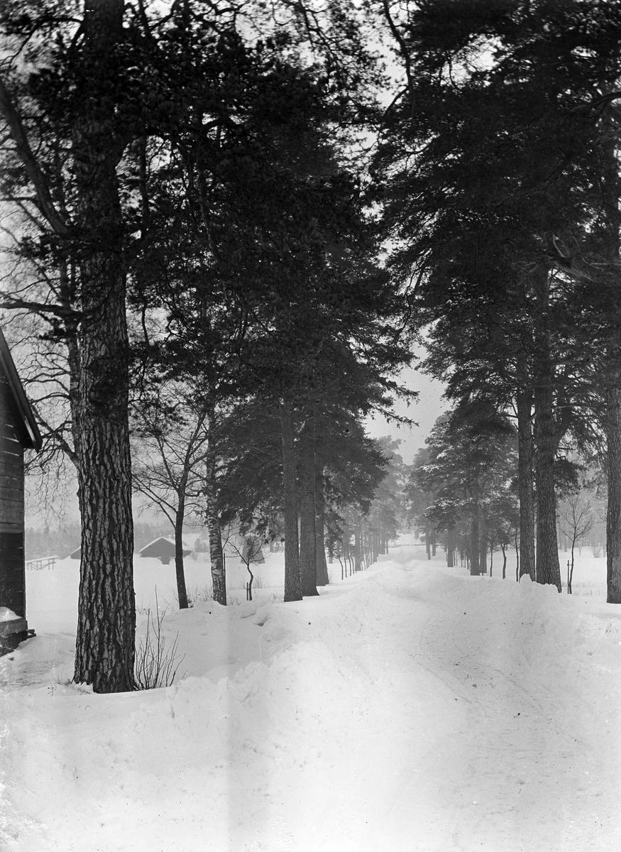 Åbyallén. Den 27 mars 1909