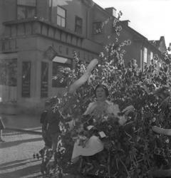Studenterna andra dagen, 1951.En kvinnlig student körs hem
