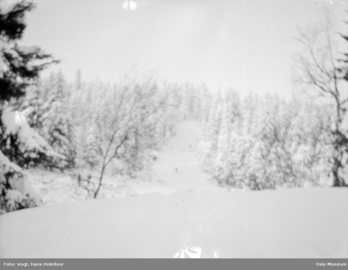 utsikt, skog, snø