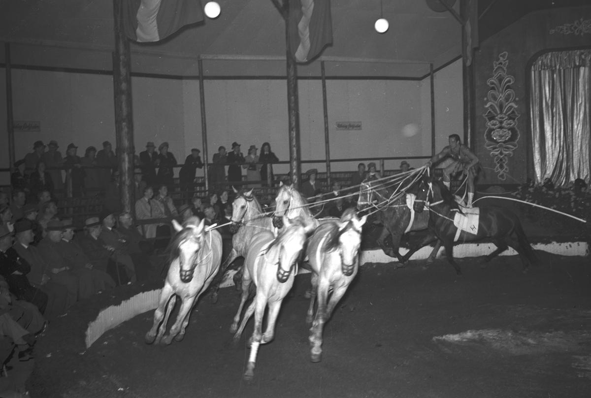 Furuviksbarnen, revy på cirkus