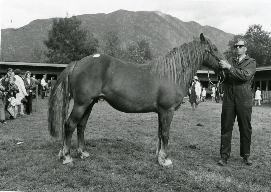 Arne Ottar Øygarden mønstrar hesten AR-PEPPT 29712.