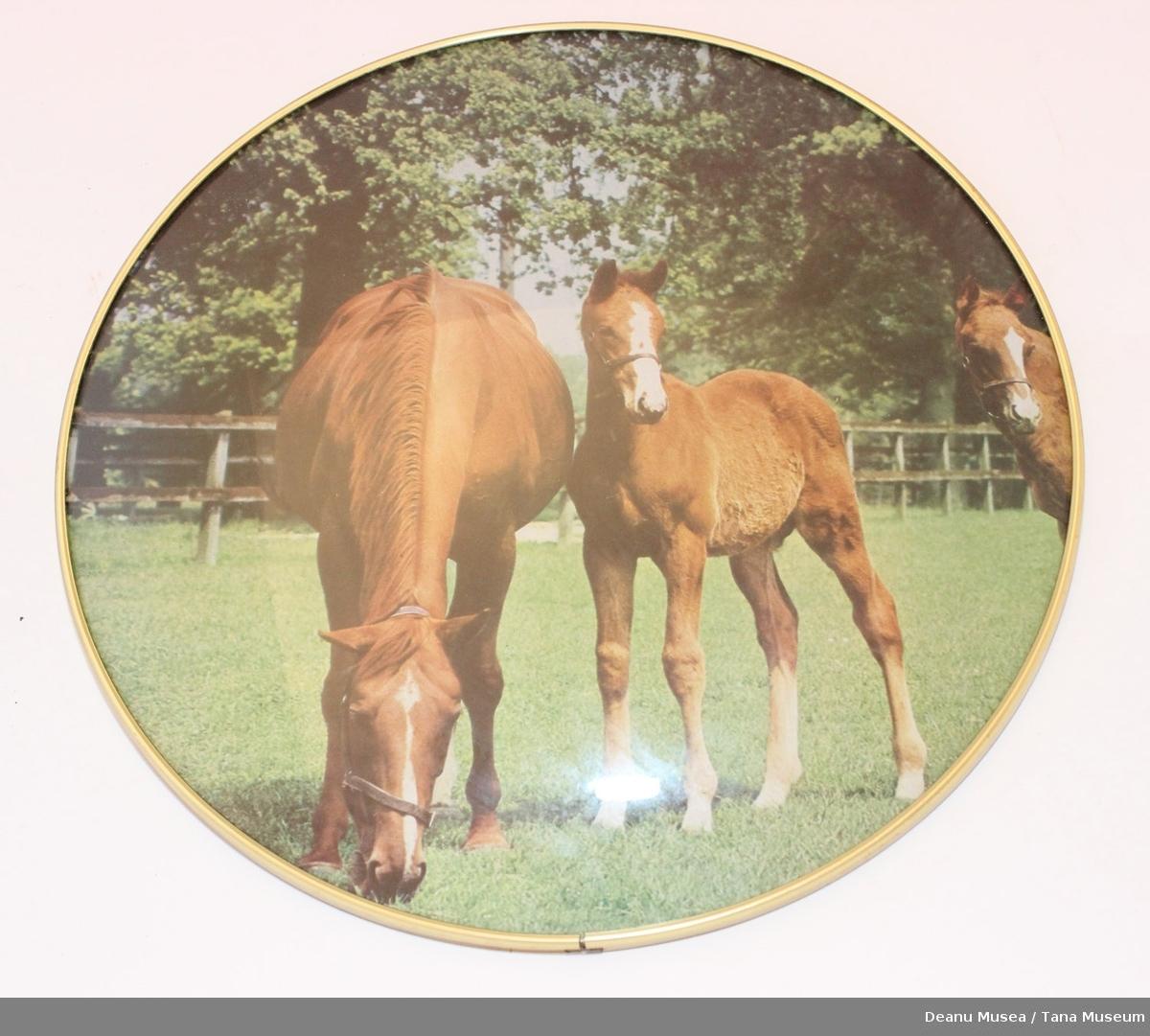 3 hester på ett jorde.