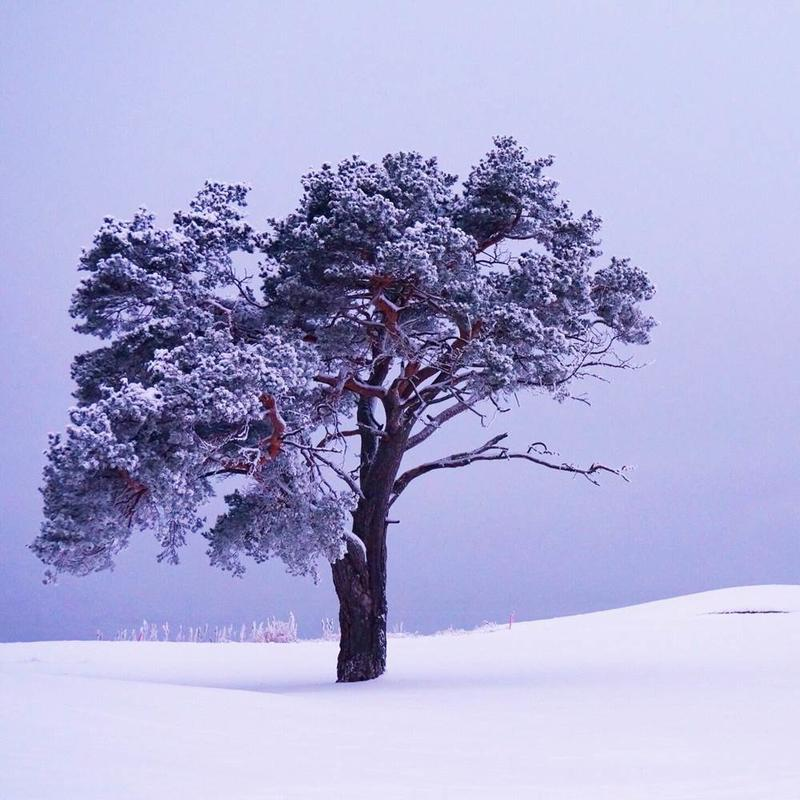 "Aprilvinner i fotokonkurransen ""Det fantastiske treet""."