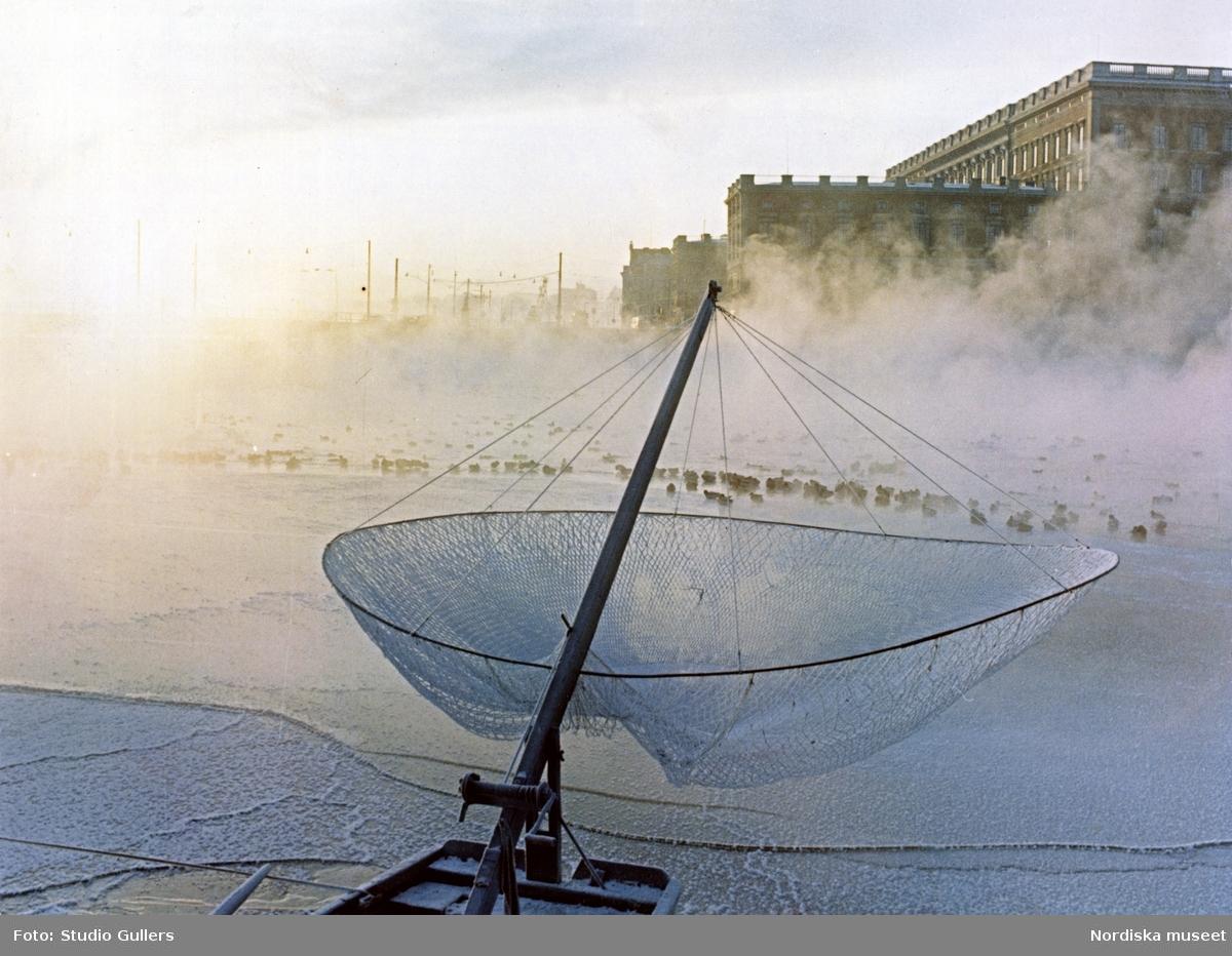 Stockholm. Kungliga slottet i dimma. I förgrunden en håvfiskebåt. Änder sitter på isen.