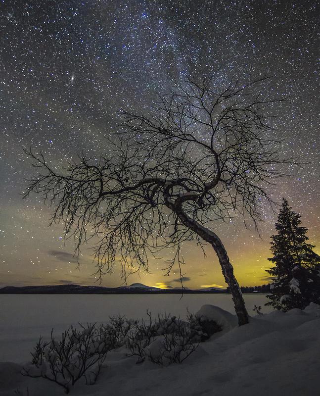 "Vinnerbilde fotokonkurransen ""Det fantastiske treet"". Jørn Kristensen."