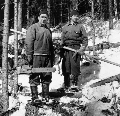 Skogsarbeidere i arbeid i skogen (Trysil).