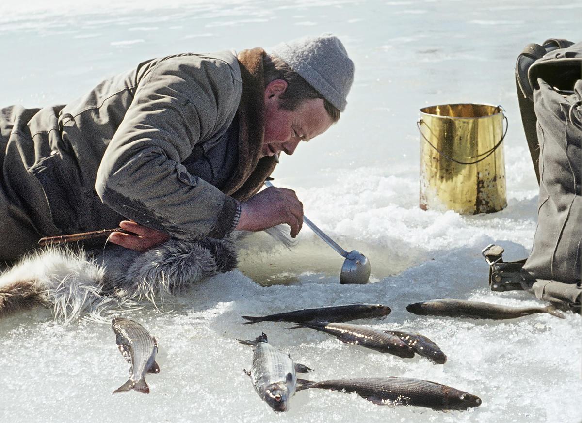 Grindalsfluefiske.  Da isen var i ferd med å sprekke opp var det på tide å finne frem bøtte, øse og dørslag for å fange larvene av grindalsflua.