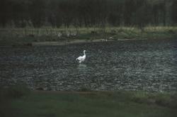Fugl i vannkanten.