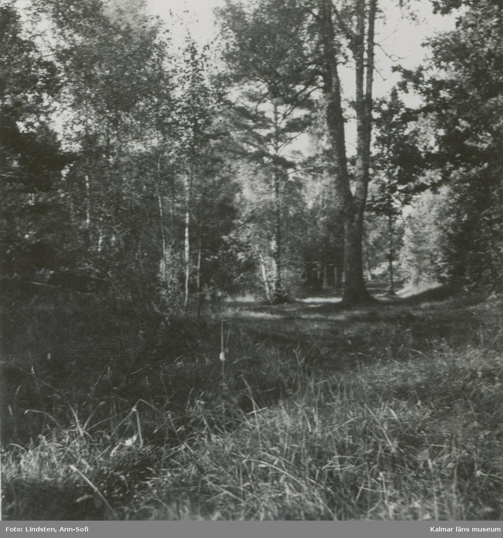 En skogsbygd vid Ugglebo.