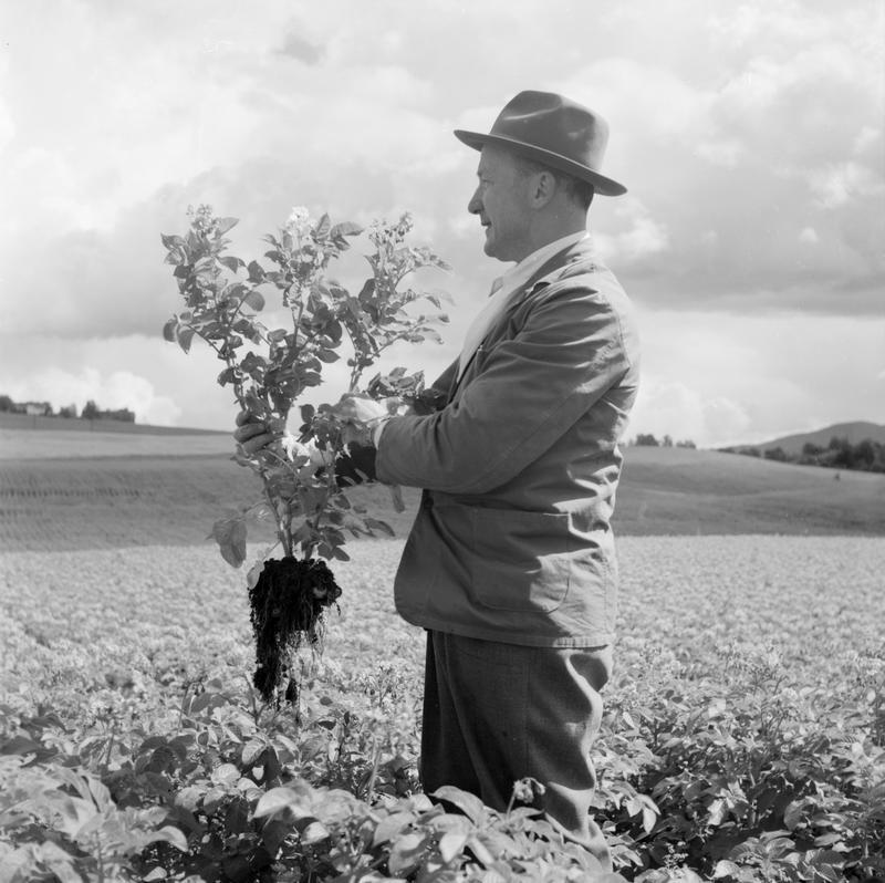 Mann i åker 1958-59