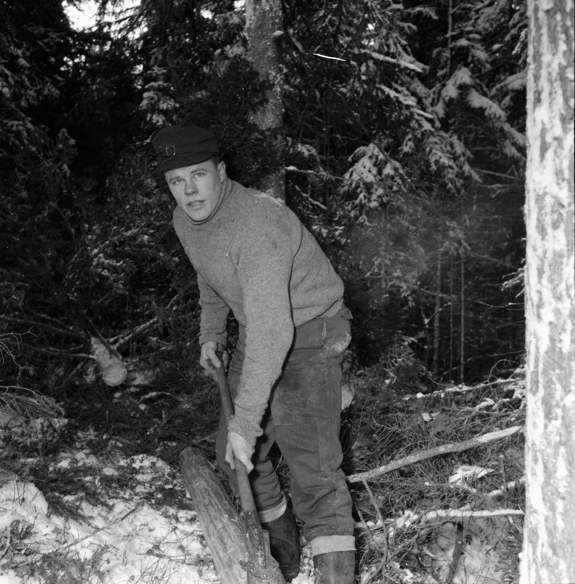 Timmerhuggning i Skogen.