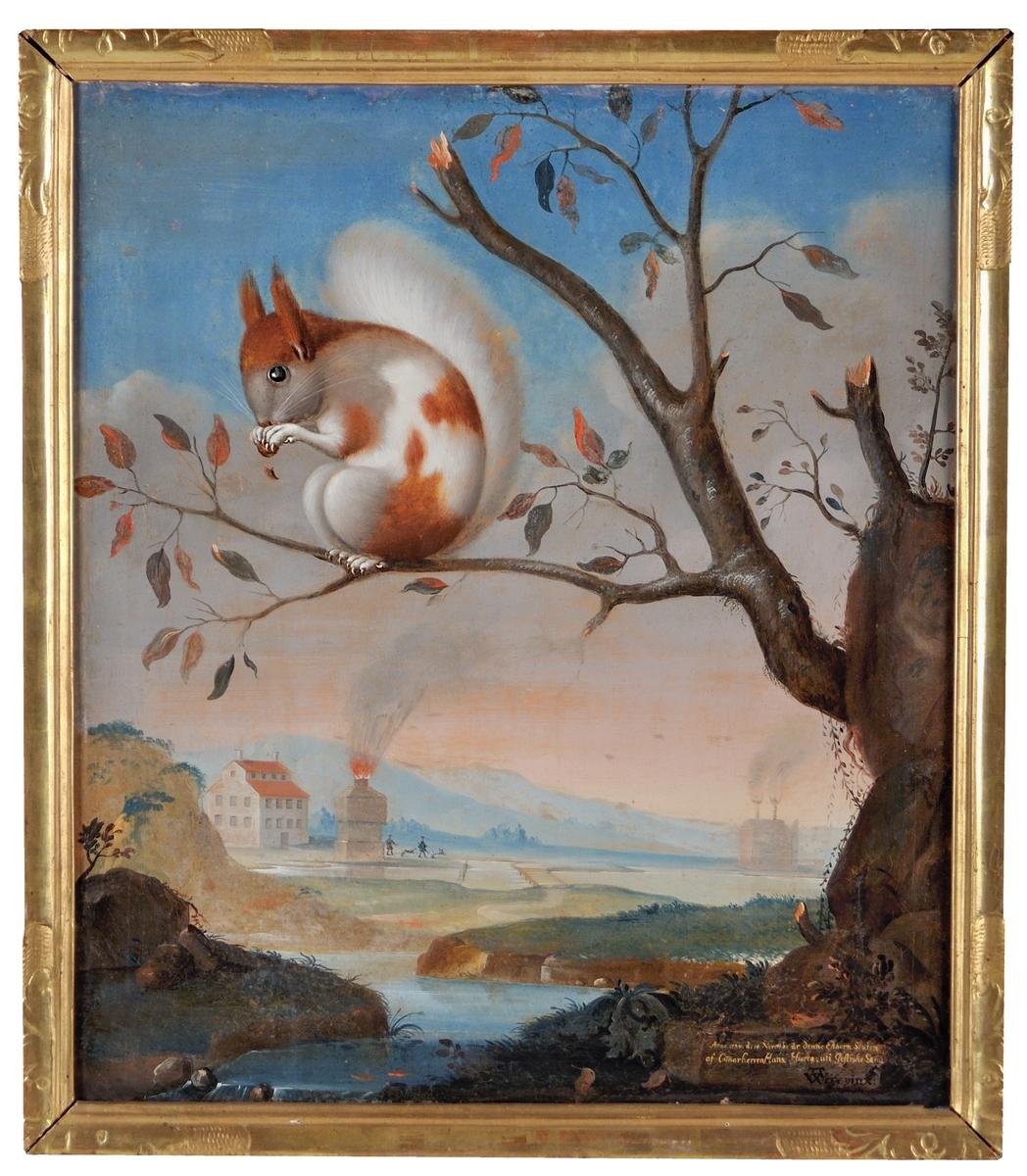 """Oljemålning, """"Ekorre vid Högbo bruk"""", av A. Weise (av Ehrenstrahls skola). I förgrunden en röd och vit ekorre gnagande på en nöt, sittande på en gren ut från en stubbe. I fonden landskap med vatten, byggnader, masugn mm.  Nertill texten """"Anno 1734 d: 14 Novemb. är denna Ekhorn skuten af Cammarherren Hans Hierta uti Gestrike Land"""". Förgylld ram."""