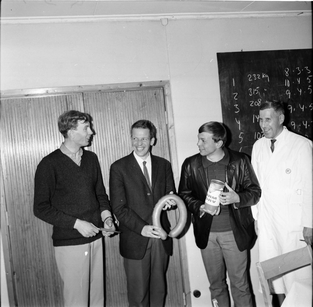 Vem vinner kalven, NNS, 23 Maj 1966