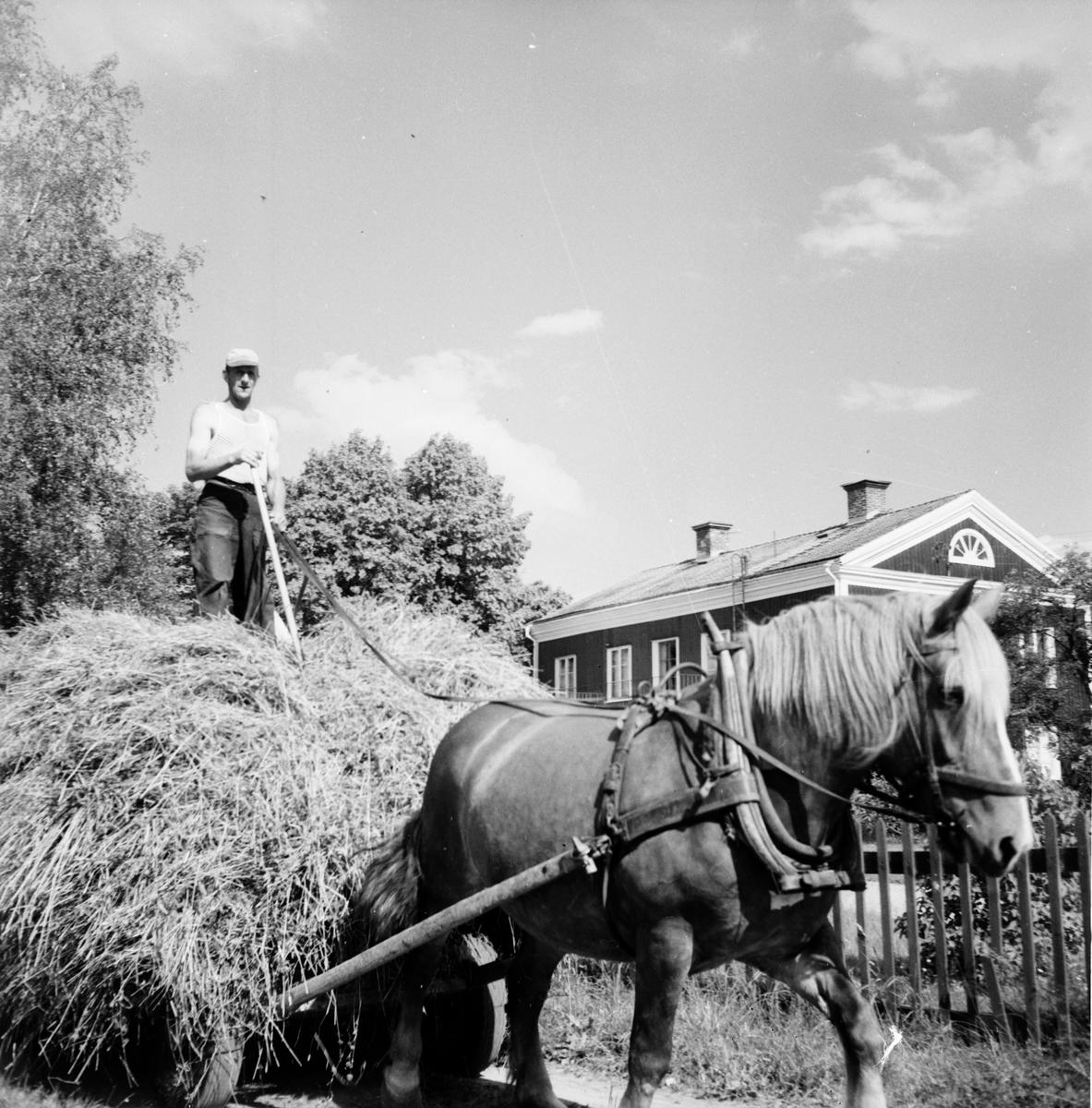 G. Eliasson simskola Skog, Stråtjära 23/8 1959