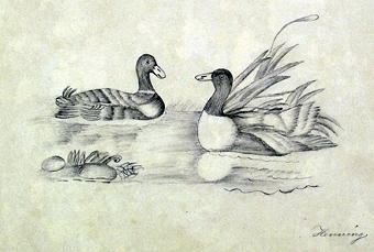 Bilden föreställer två änder i ett vattendrag. Signerad.