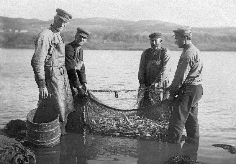 Lågåsildfiske ved Vingrom (Foto/Photo)