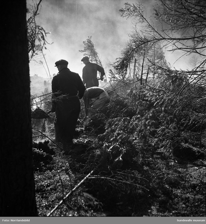 Släckningsarbete av skogsbrand i Skallböle, Matfors.