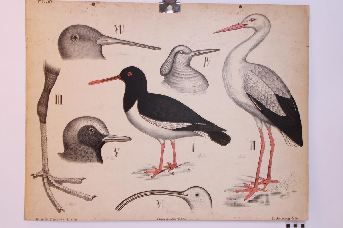 Detaljer av forskjellige fuglearter.