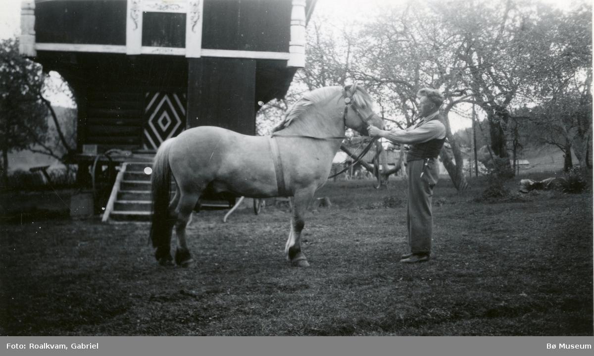 Hesten Gjøysen i tunet hos Gjermund Gåra.
