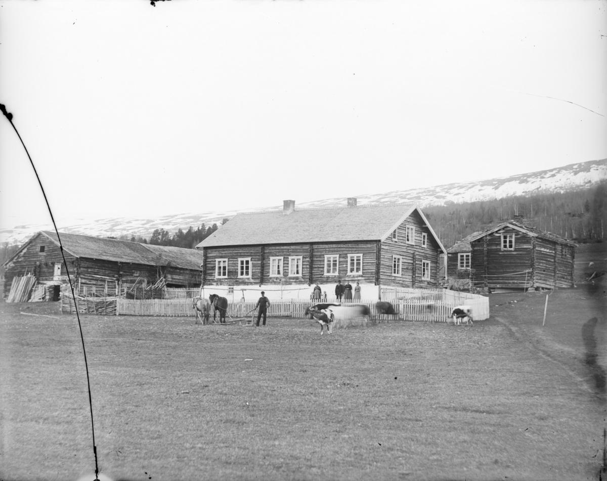 Lesjaskog, Nordsletten, gardstun, 2 hester med treplog, 5 storfe, 5 voksne og 2 barn.