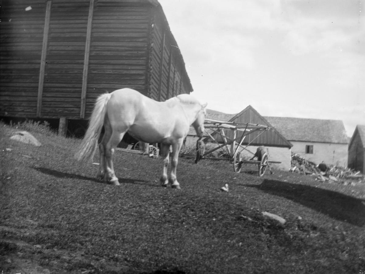 Hest på ukjent gård, trolig i Øyer