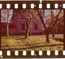 Parktrær