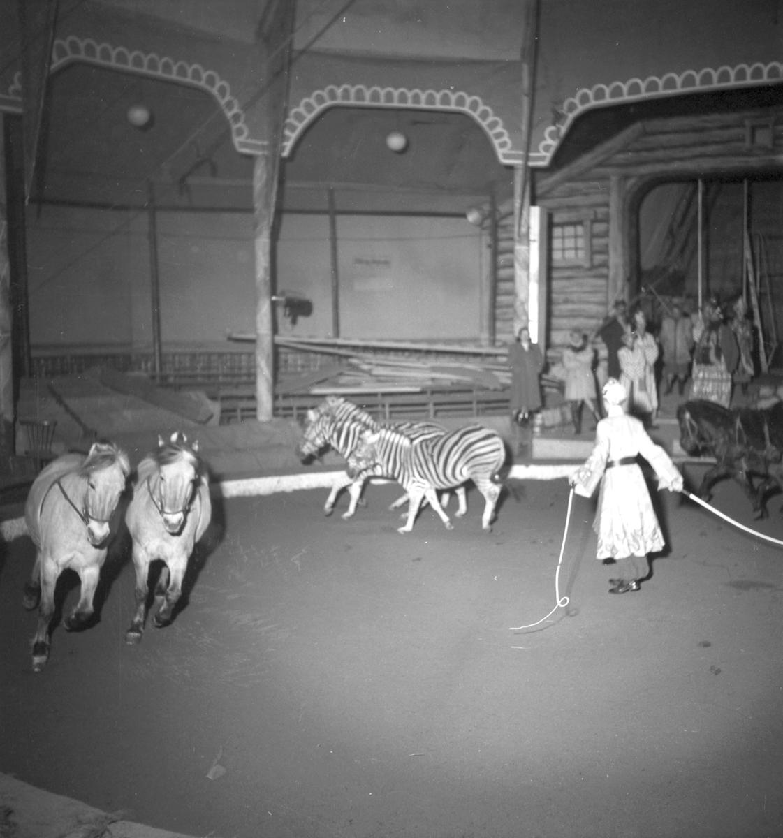 Furuviksparken invigdes pingstdagen 1936.  Cirkusbyggnaden Teater-Cirkus med cirka 600 platser, uppförd 1940.  Även några zebror fanns på plats