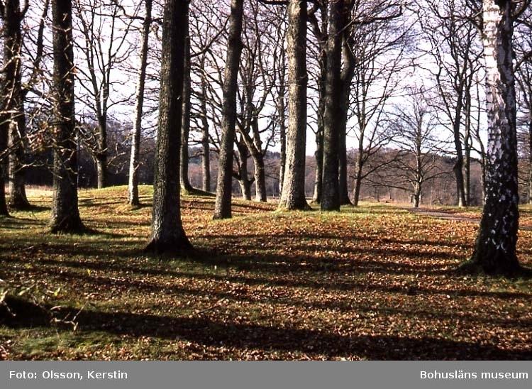 """Text på kortet: """"Kungshjälmarna Holma park Okt 1986"""". Enl. medföljande text: """"Kungshjälmarna"""" gravfält i Holma park""""."""