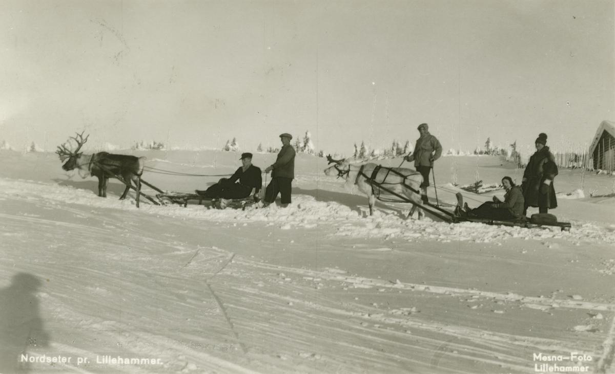 Postkort: Nordseter - med to reinsdyr med sleder